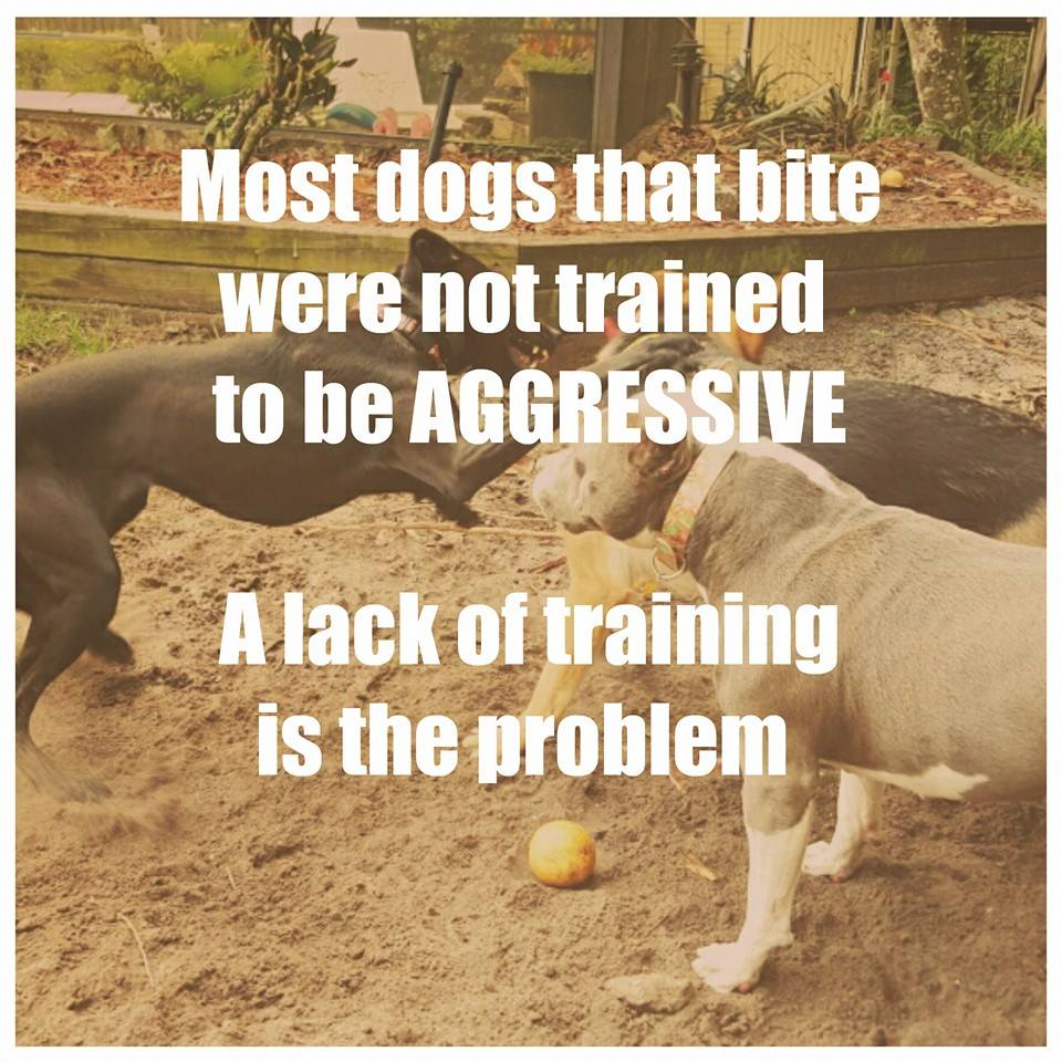 dog fights dog aggression training
