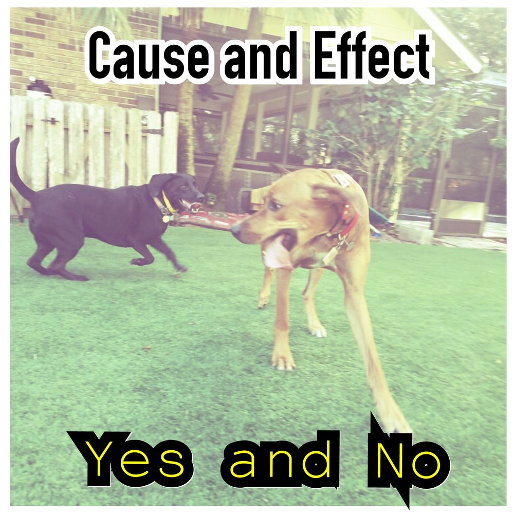 dog socialization orlando