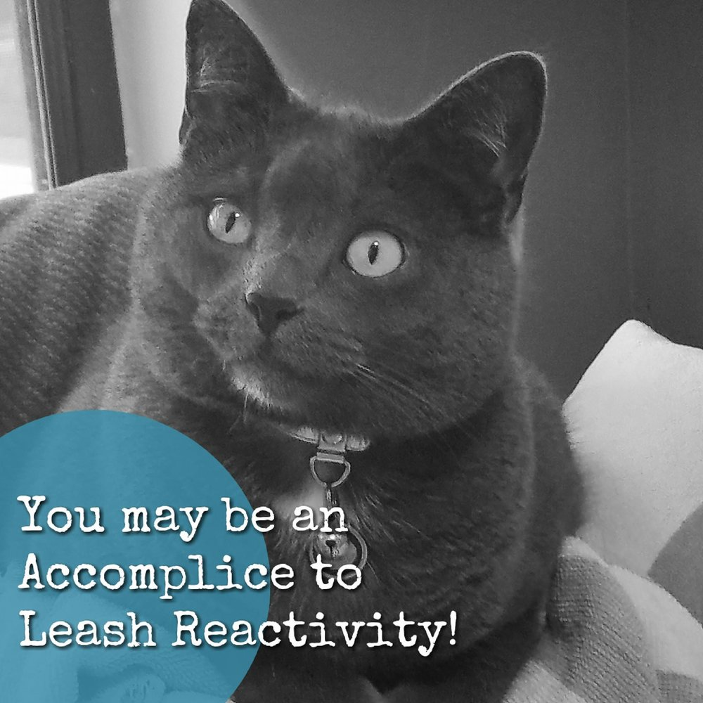leashreactivity take the lead