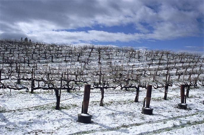 Wines for Winter Weather