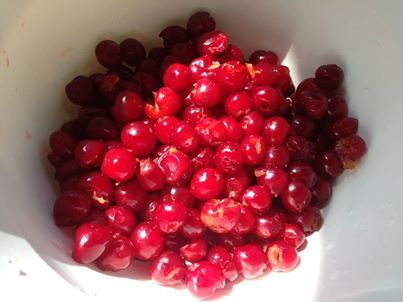 pitted sour cherry