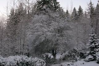 2006+Nov,+snow+(19).JPG