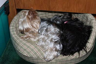 Alex and Roxy