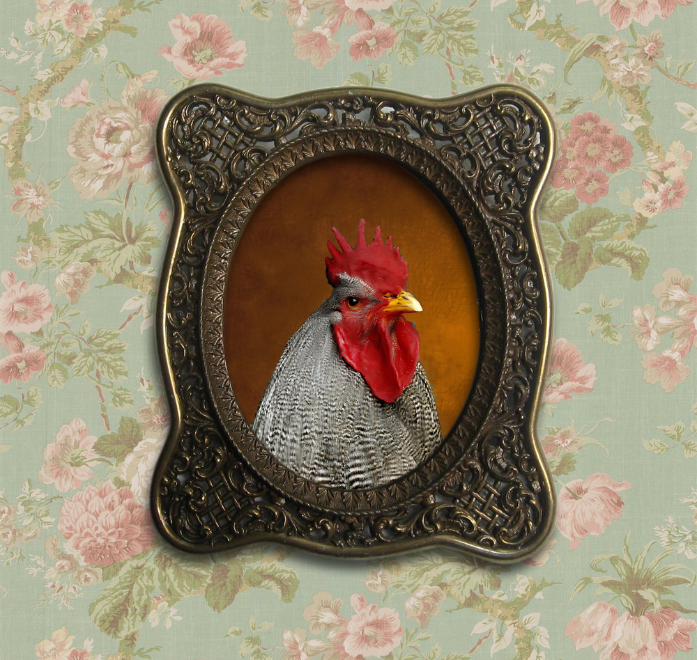 Chicken2-Framed.jpg