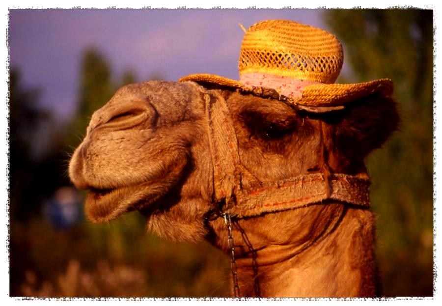 camel hat_Fotor.jpg