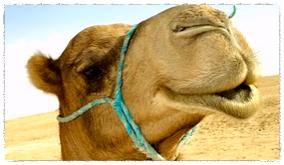 smiling camel_Fotor.jpg