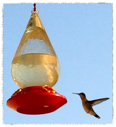 bird_Fotor.jpg