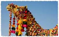 bling camel_Fotor.jpg
