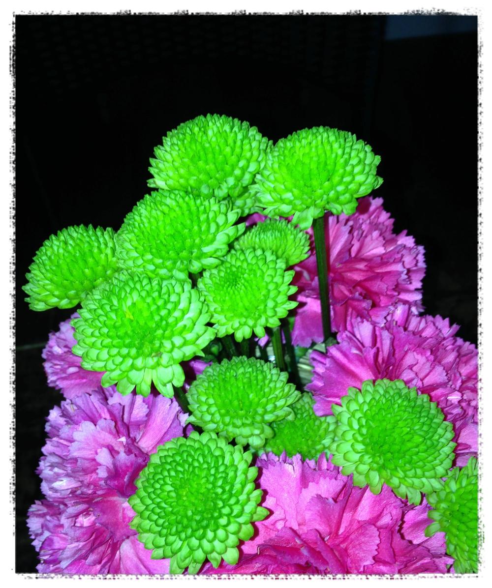 flowersFotor.jpg