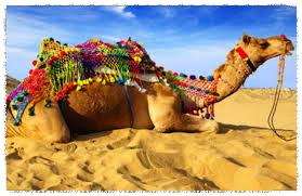 lazy camel_Fotor.jpg