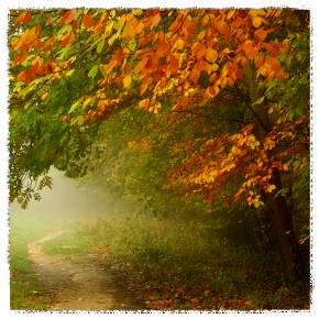 path_Fotor.jpg