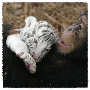 pic 2 monkey_Fotor.jpg