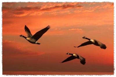 geese_Fotor.jpg