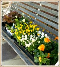 flowers_Fotor.jpg