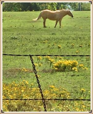 horse_Fotor.jpg