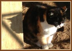 veggie kitty_Fotor.jpg