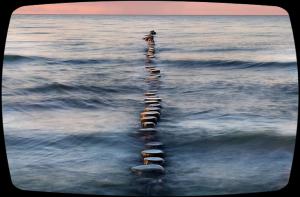 seaFotor.jpg