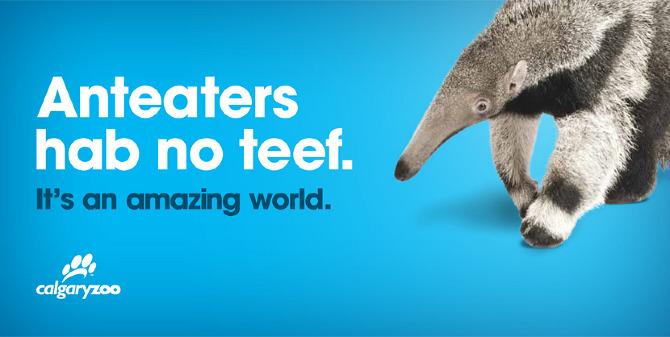 zoobrand_anteater.jpg