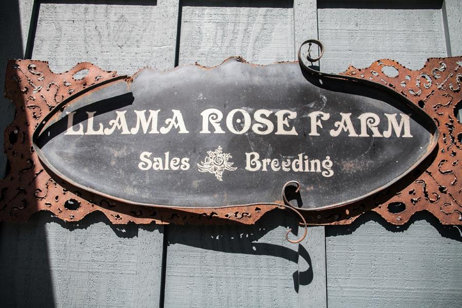 002-llama-rose-farm-wedding.jpg