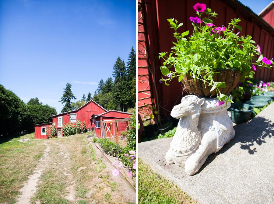 001-llama-rose-farm-wedding.jpg