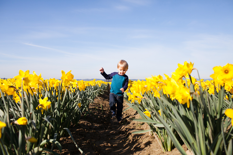 011-mount-vernon-washington-daffodils-norley-family.jpg