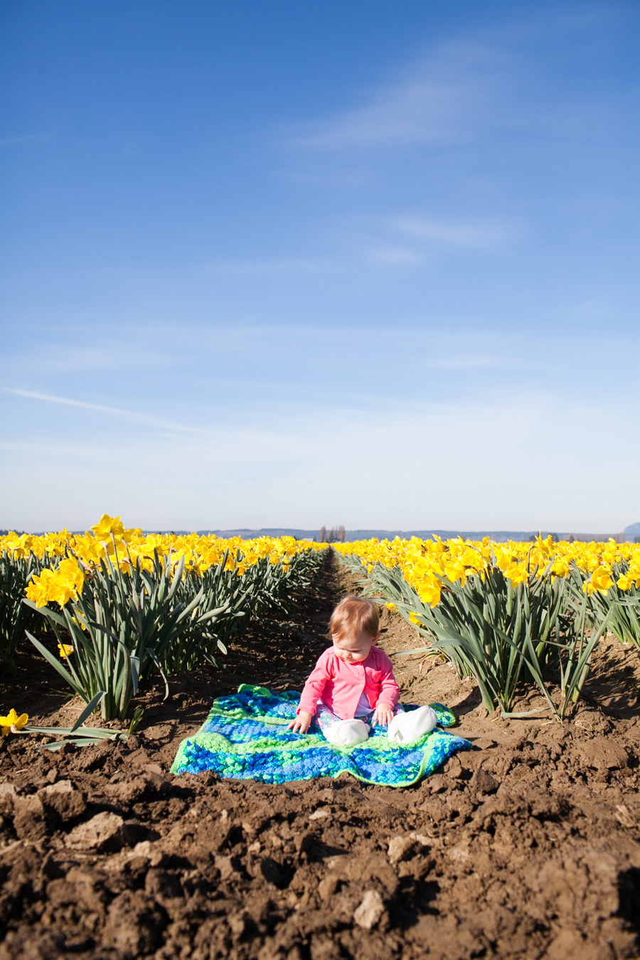 012-mount-vernon-washington-daffodils-norley-family.jpg