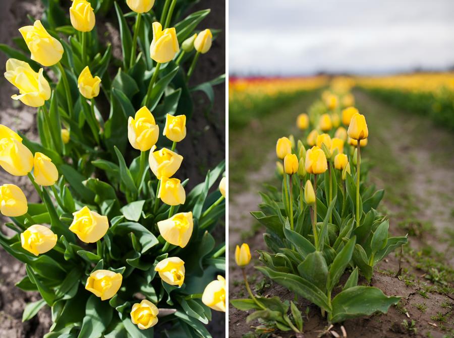002-mount-vernon-washington-tulip-festival-2015.jpg