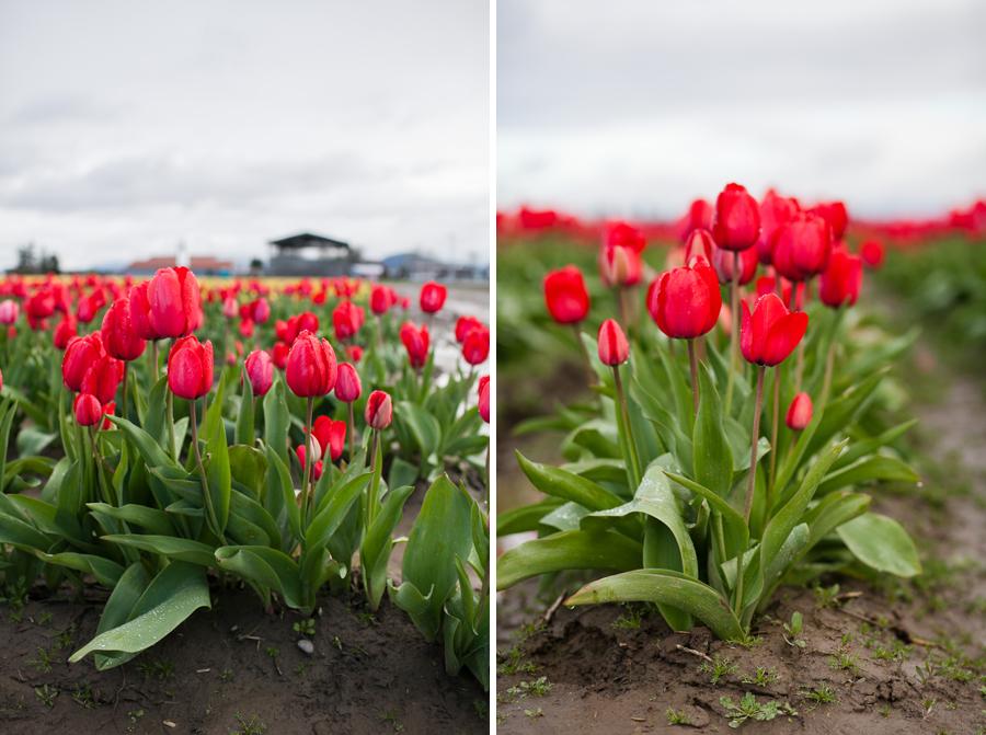 010-mount-vernon-washington-tulip-festival-2015.jpg