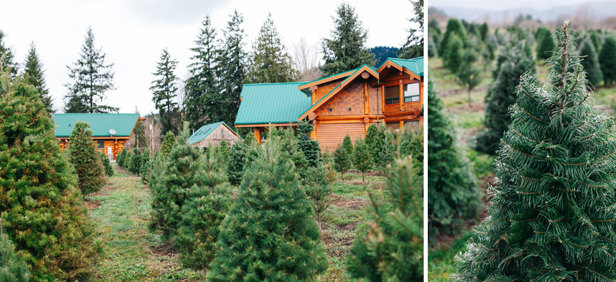 005-fullner-family-christmas-tree-farm-everson-washington-bellingham-family-photographer-katheryn-moran-photography.jpg