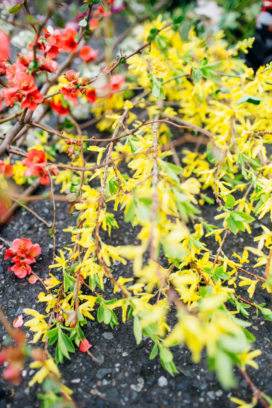 009-bellingham-stylized-flower-photographer-photo-pozie-by-natalie.jpg