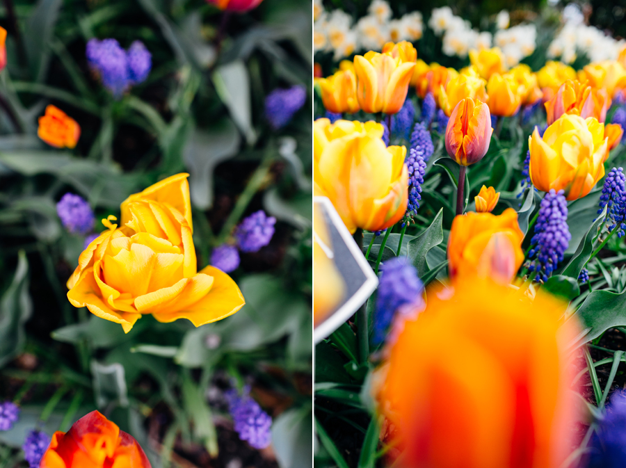 001-bellingham-skagit-photographer-photo-tulip-festival-katheryn-moran.jpg