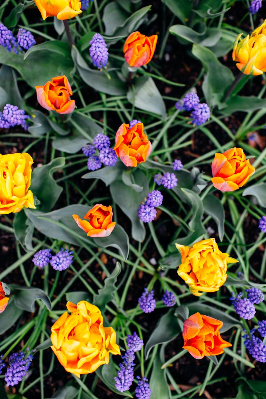 002-bellingham-skagit-photographer-photo-tulip-festival-katheryn-moran.jpg