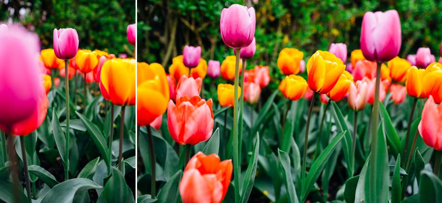 003-bellingham-skagit-photographer-photo-tulip-festival-katheryn-moran.jpg