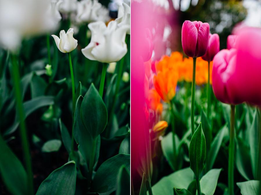 007-bellingham-skagit-photographer-photo-tulip-festival-katheryn-moran.jpg