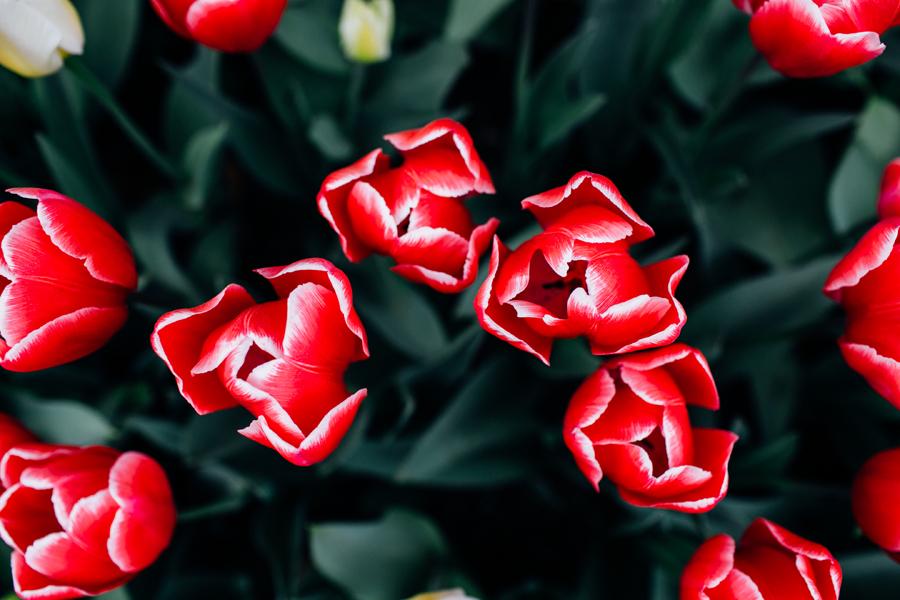 009-bellingham-skagit-photographer-photo-tulip-festival-katheryn-moran.jpg