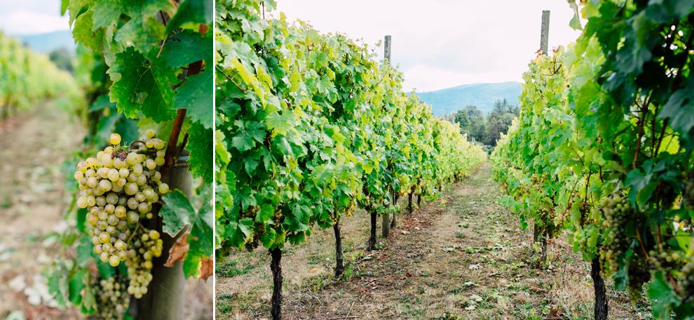 002-mount-baker-vineyards-grapes-food-bellingham-katheryn-moran-photography.jpg