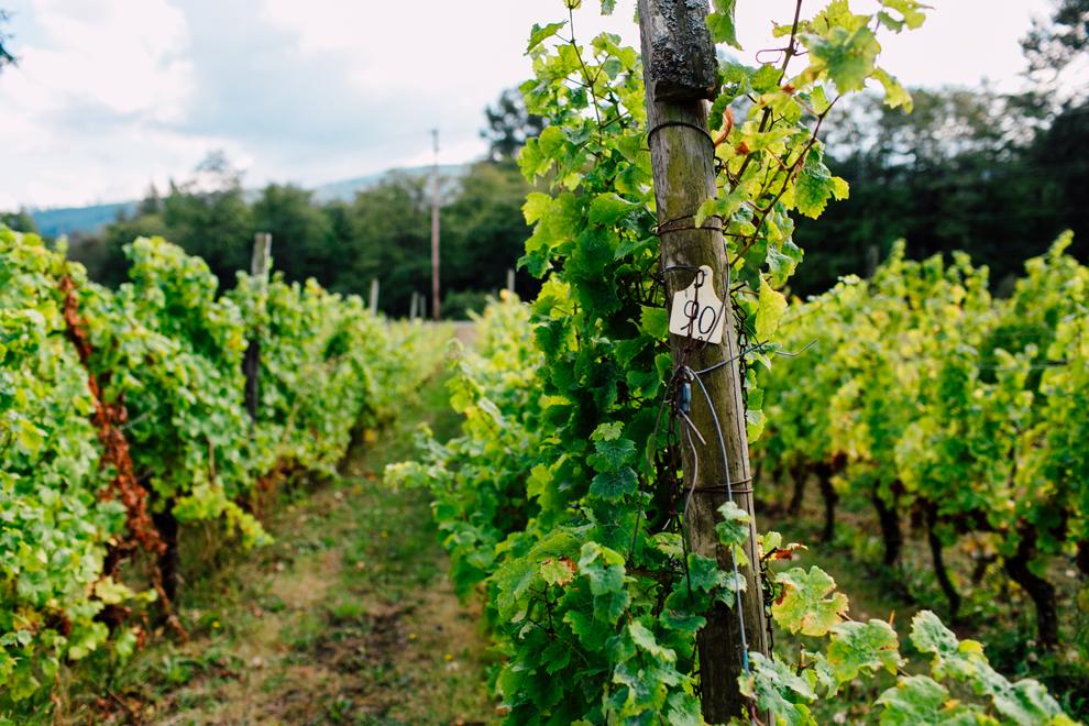 003-mount-baker-vineyards-grapes-food-bellingham-katheryn-moran-photography.jpg