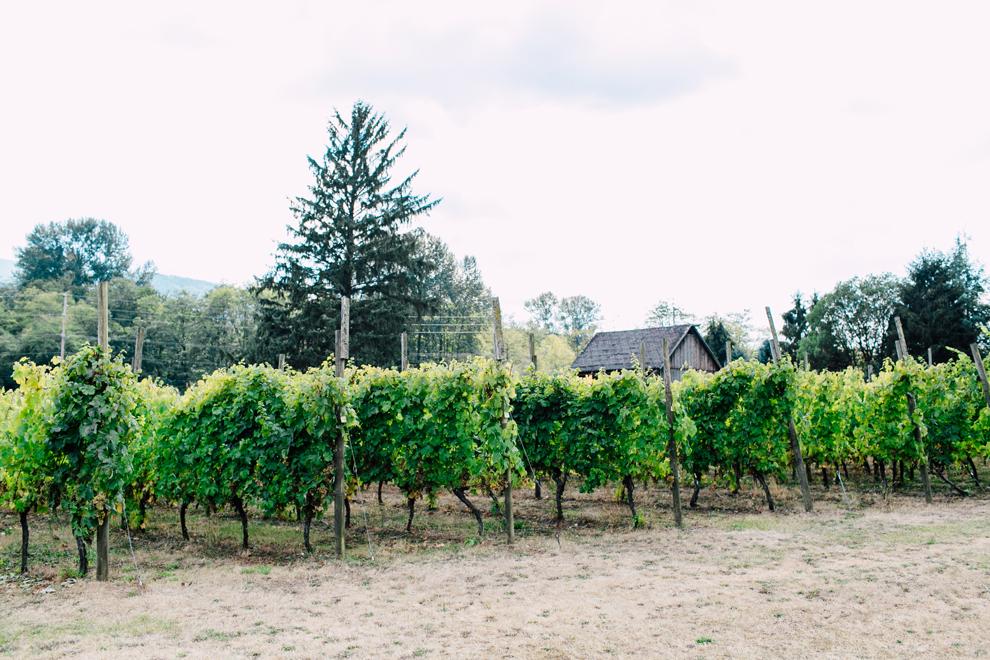 001-mount-baker-vineyards-grapes-food-bellingham-katheryn-moran-photography.jpg