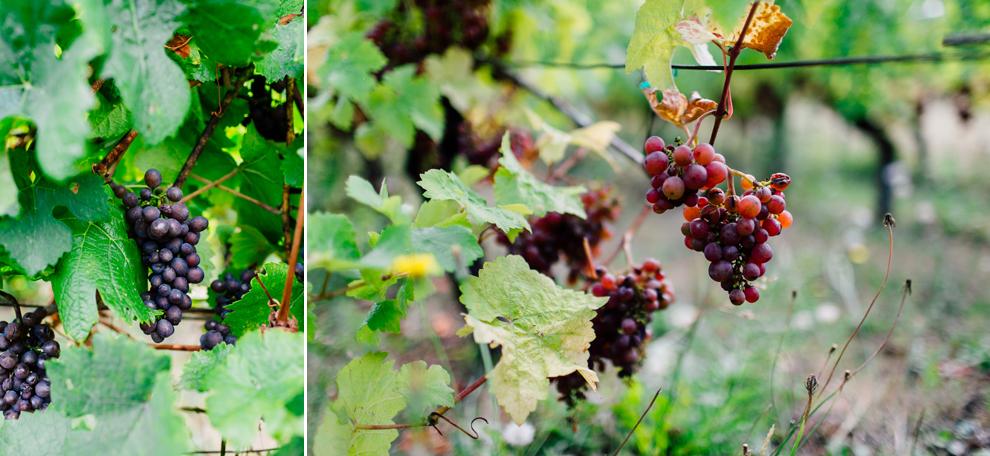 004-mount-baker-vineyards-grapes-food-bellingham-katheryn-moran-photography.jpg