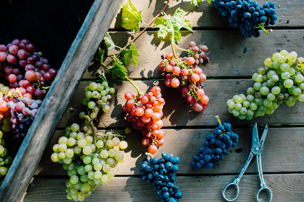 007-mount-baker-vineyards-grapes-food-bellingham-katheryn-moran-photography.jpg