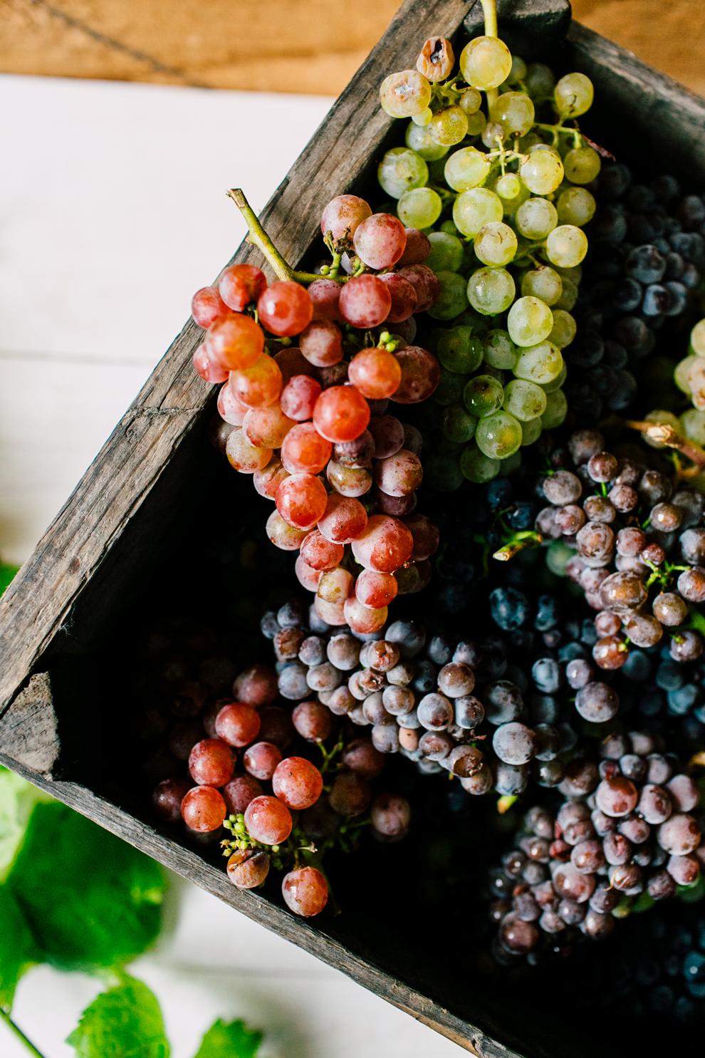 010-mount-baker-vineyards-grapes-food-bellingham-katheryn-moran-photography.jpg