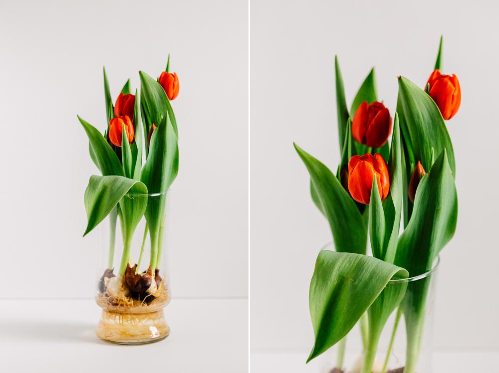 004-bellingham-flower-studio-photographer-katheryn-moran-spring-2017.jpg