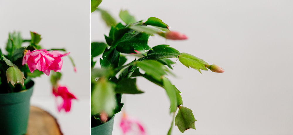 006-bellingham-flower-studio-photographer-katheryn-moran-spring-2017.jpg