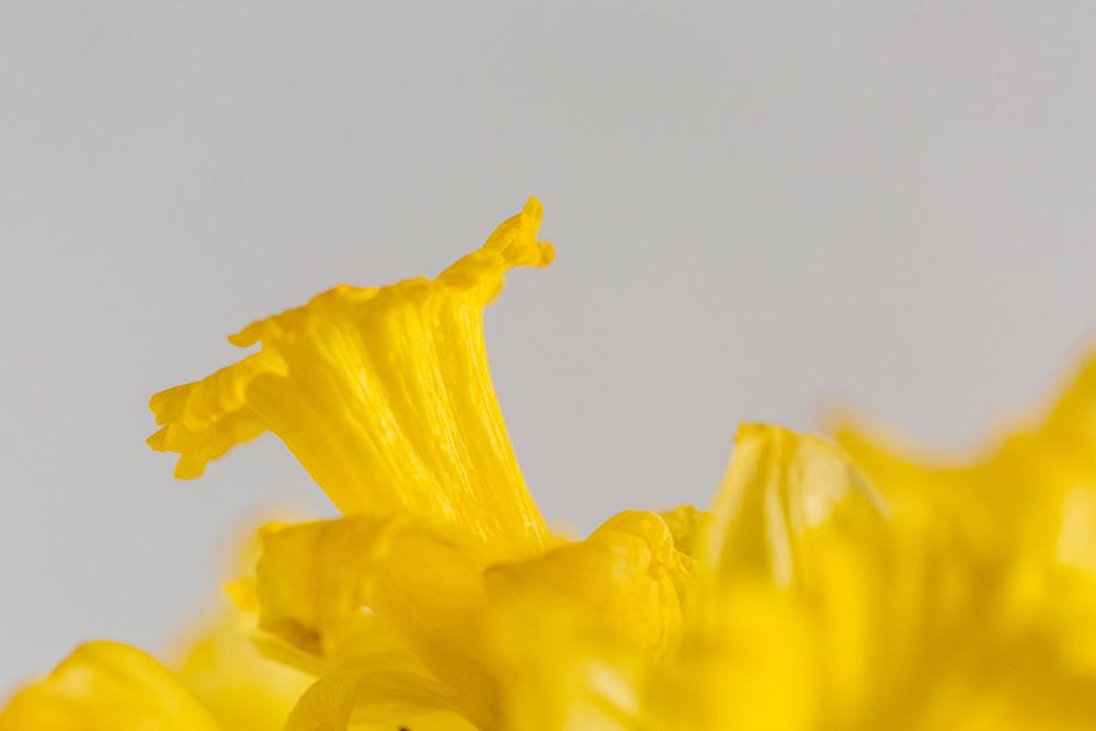007-bellingham-flower-studio-photographer-katheryn-moran-spring-2017.jpg
