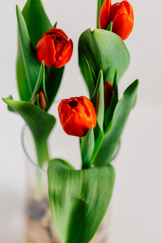 005-bellingham-flower-studio-photographer-katheryn-moran-spring-2017.jpg
