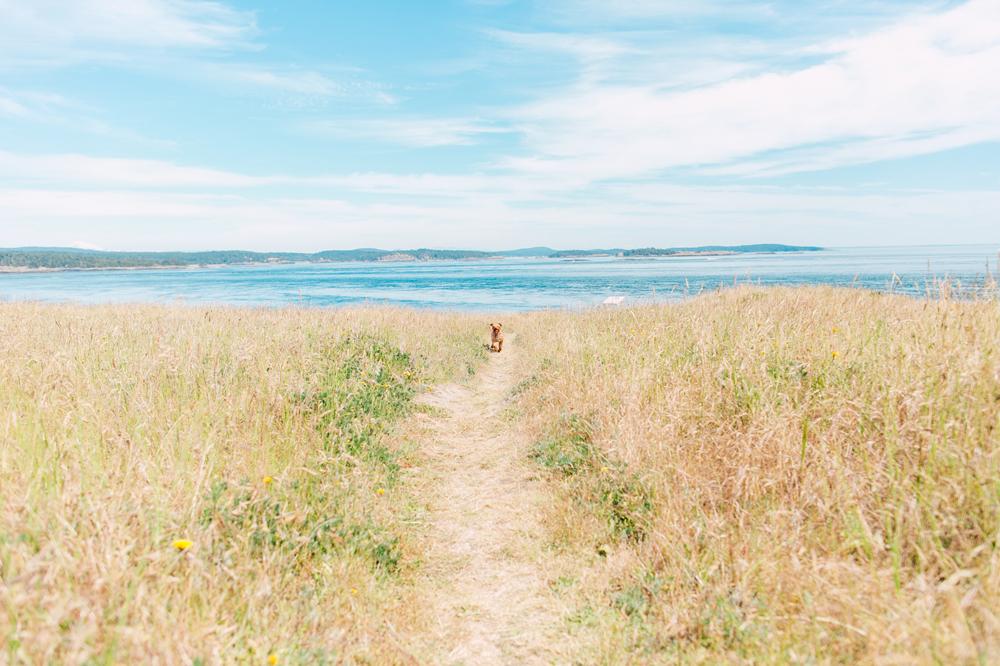 011-san-juan-island-photographer-katheryn-moran-anniversary-yellow-stripe-2017.jpg