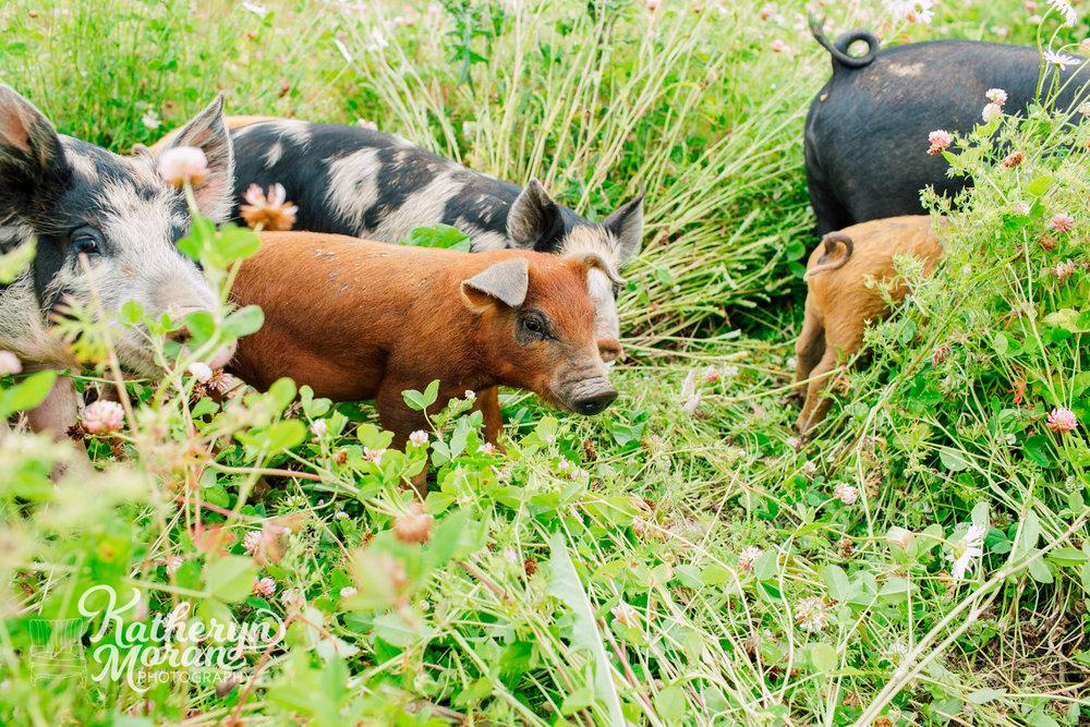 bellingham-marketing-photographer-katheryn-moran-alluvial-farms-spring-2018-16.jpg