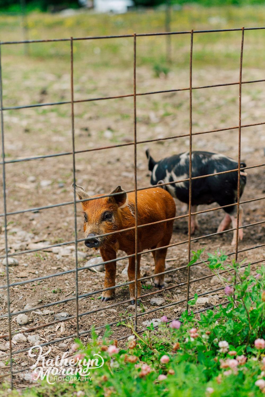 bellingham-marketing-photographer-katheryn-moran-alluvial-farms-spring-2018-20.jpg
