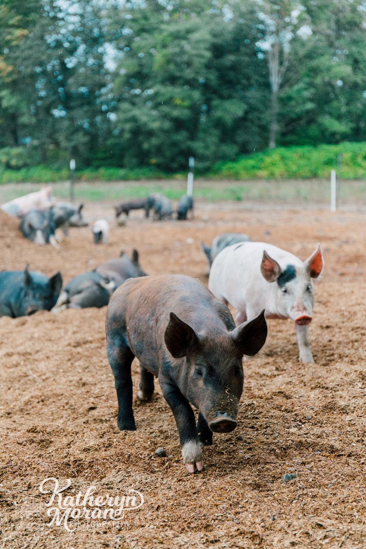bellingham-farm-food-photographer-katheryn-moran-alluvial-farms-summer-two-1.jpg