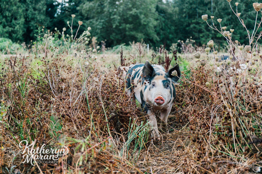 alluvial-farms-katheryn-moran-photography-september-2018-5.jpg